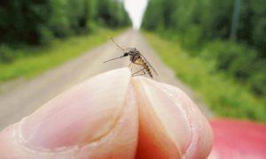 zanzare perchè ci pungono